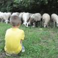 pecore_2_DSC_1031