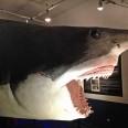 squalo carlotta